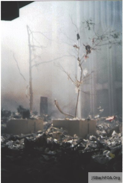 Pictures from the World Trade Center 9/11 2001